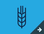农产品期货及期权
